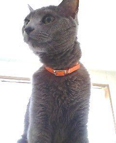 Hermes_cat